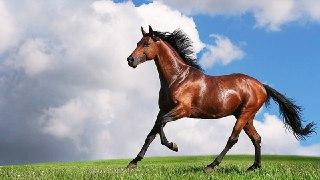 اسب در فال قهوه تعبیر دیدن اسب در فال قهوه دیدن اسب در فال قهوه تعبیر اسب در فال قهوه معنی اسب در فال قهوه