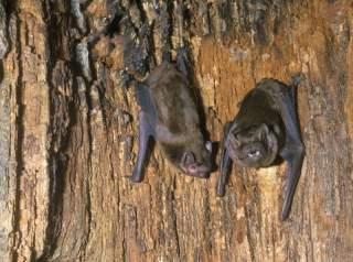 خفاش ها کجا زندگی میکنند محل زندگی خفاش ها خفاش در غار
