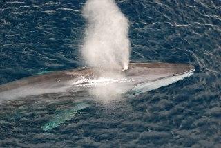 تنفس نهنگ سوراخ تنفسی نهنگ دلفین آب نهنگ نفس کشیدن نهنگ
