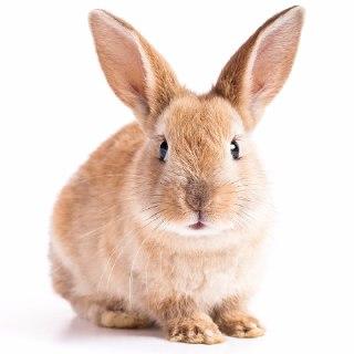 خرگوش در فال قهوه فال قهوه خرگوش تعبیر خرگوش در فال قهوه دیدن خرگوش در فال قهوه معنای خرگوش در قهوه