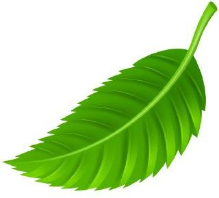 دیدن برگ در فال قهوه نماد برگ در فال فال واقعی قهوه برگ فال معنای برگ در فال قهوه معنی برگ در فال قهوه دیدن برگ در فال قهوه