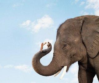چرا فیل از موش میترسد