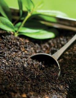 چای-سیاه