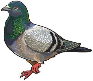 تعبیر کبوتر در فال قهوه معنی کبوتر در فال قهوه معنای کبوتر در فال قهوه  کبوتر در فال قهوه دیدن کبوتر فال واقعی قهوه نماد کبوتر