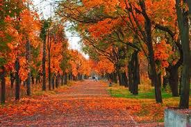 تعبیر خواب پاییز