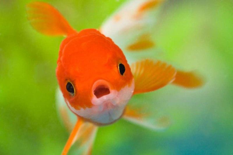 ماهی در فال قهوه ماهی نماد چیست ماهی