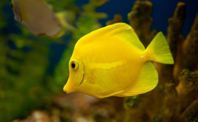 تعبیر خواب ماهی دیدن ماهی در خواب تعبیر خواب واقعی خواب دیدن ماهی ماهی بزرگ ماهی زرد