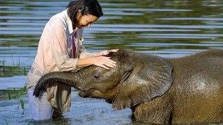 آیا فیل ها انسان هایی را که با آنها ارتباط داشته اند، به خاطر می آورند؟