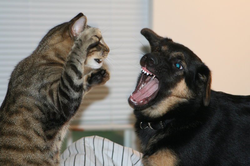 دعوای سگ و گربه
