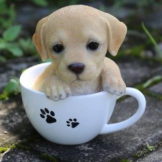 سگ در فال فهوه سگ با نمک سگ در فال قهوه سگ در فال