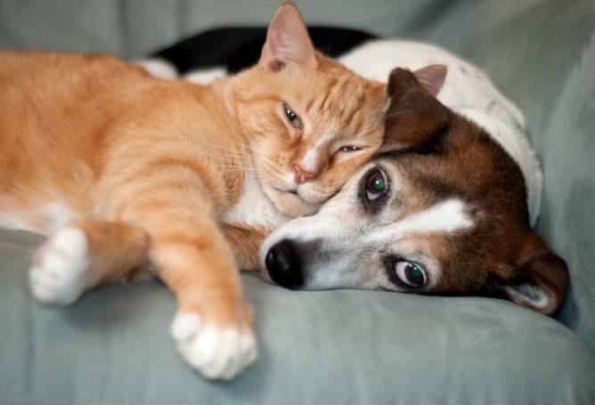 دوستی سگ و گربه