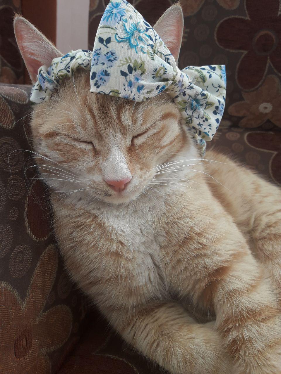 بابی جون بابی بابی بابی جون گربه خیابانی گربه ملوس