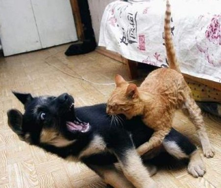 سگ ها و گربه ها سگ و گربه سگ