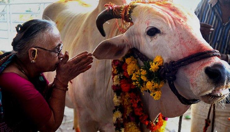 گاو در هند