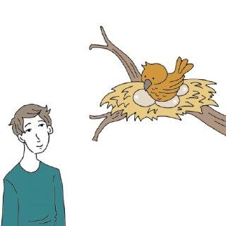 پرنده در فال قهوه پرنده نماد چیست دیدن پرنده در فال قهوه